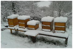 Bild: Bienenstand im Winter