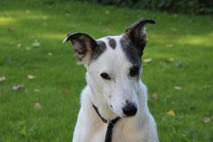Bild: Trauriger Joey, Smeura Rumänien, Tierhilfe Hoffnung, Tierheim Bielefeld
