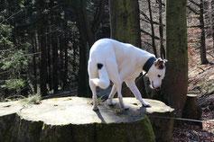 Bild: Kletternder Joey; Smeura Rumänien, Tierhilfe Hoffnung, Tierheim Bielefeld