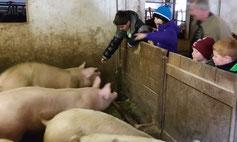 Schweinehaltung der Fam. Truskaller in Malta