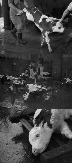 Le sang des bêtes de Georges Franju