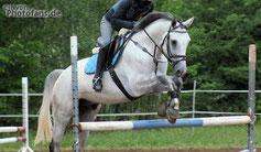 SEVENTH, Hengst, Dt. Sportpferd, 6 Jahre