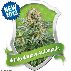 cannabis white widow