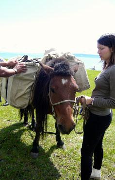 Attelage sacoches cheval de bât Mongolie