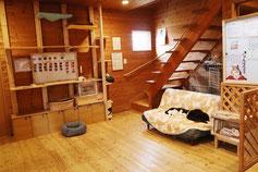 犬猫とふれあう部屋
