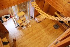2階からみた犬猫とふれあう部屋