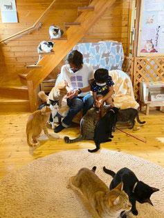 犬もいる 猫とふれあう部屋