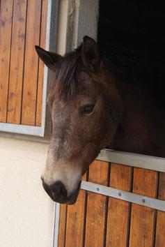 Notre partenaire pour cette séance de psychothérapie avec le cheval
