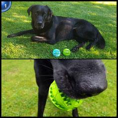 ATPWONZ 2er Hundespielzeug Ball Spielzeug für Hunde Robust Kauspielzeug Spielzeug für Große & Kleine Hunde Voll-Gummi Hunde-Frisbee