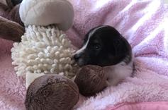 drei Wochen alt