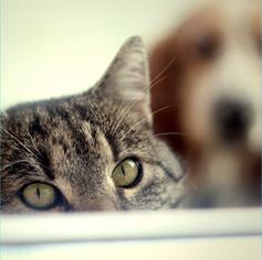 tratement des allergies chez les animaux chats chiens chevaux