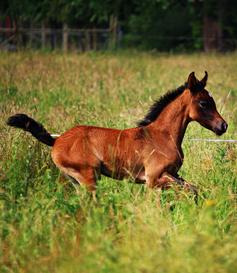 Fohlen, Pferd, Fütterung, Pferdefütterung