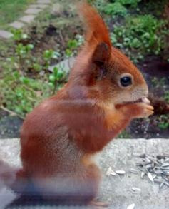 Das Eichhörnchen?