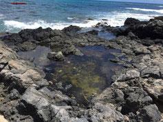 ハワイ オアフ島 パワースポット マカプウヒーリングプール 岩場に溜まった海水による癒し
