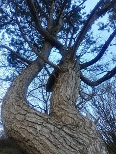 Tor zum Himmel, Baum, Himmel, Verbundenheit