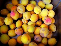 Pfirsiche verarbeiten