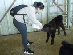 子牛の授乳体験時の様子