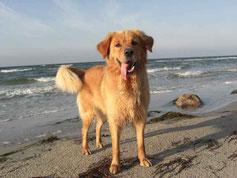 Ferienwohnung für den Urlaub mit Hund auf Fehmarn