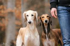 Zwei Hunde nebeneinander stehend neben ihrem Menschen