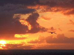 Sunset with Gull by David Penpraze