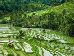 Terrazas de arroz en Jatiluwih