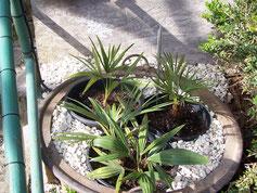 Pflanzen ausgesetzt im Frühjahr 2012...