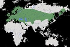 Karte zur Verbreitung der Elster (Pica pica)