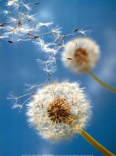 """La tempesta può disperdere i fiori, ma non riesce a distruggere i semi"""" Gibran"""