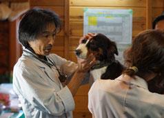 犬や小動物も診察