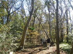 里山の四季の森