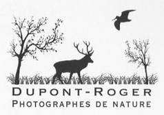 Dupont-Roger photographes de nature