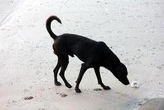 Le chien a conscience de lui olfactivement