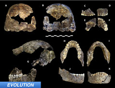 Dates for Homo naledi Released
