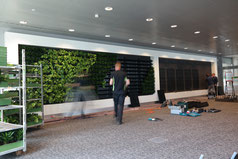 Instalación de jardín vertical de 42 metros cuadrados plantado en bandas diagonales de dracaena janet craigii compacta y epipremnum