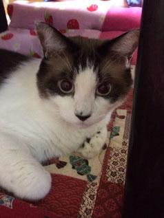 同じくお友達の猫〝シュガー〟です
