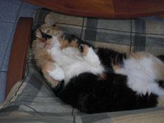 Katzenpensionen sind gegen die Katzennatur. Vor Ort Tierbetreuungs-Agentur Lorenz Noll
