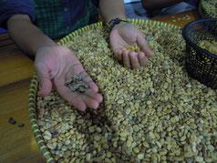 きれいに洗って乾燥させた豆の皮を手作業でむく