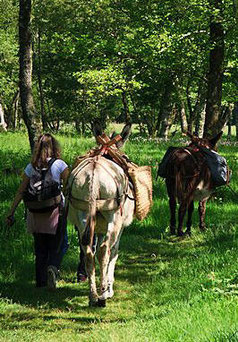 promenade avec les ânes au bord de la rivière à Champseau