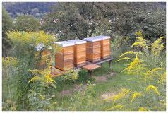 Bild: Bienenstand in Nieder-Beerbach