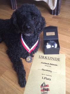 Black GameBoy mit den Trophäen gewonnener Turniere in Vorarlberg