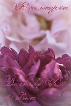 Die inneren Werte der Rose  Rosiger Adventskalender