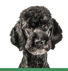 CBD Öl für Hunde von HempMate