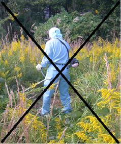 草取り 草引き 草抜き 除草 雑草種類