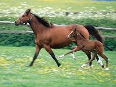 Integratori per cavallo