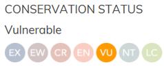 Conservation Status Manta vulnerable