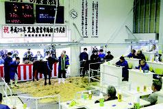 2番目にセリにかけられた子牛に129万9千円の値がつき、会場がどよめいた=13日午前、黒島家畜セリ市場