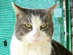 O'Malley : Gros chat personnage principal du dessin animé Les Aristochats de Walt Disney.