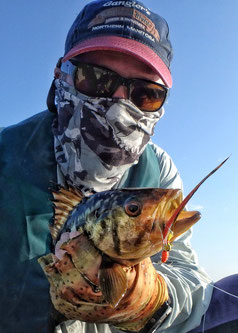 Calico Bass from San Diego Bay.
