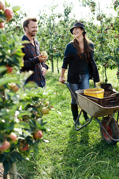 Apfelplantage auf Fünen. Foto: VisitDenmark/PR