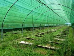 granja de caracoles de lannecaube (vic-bilh)